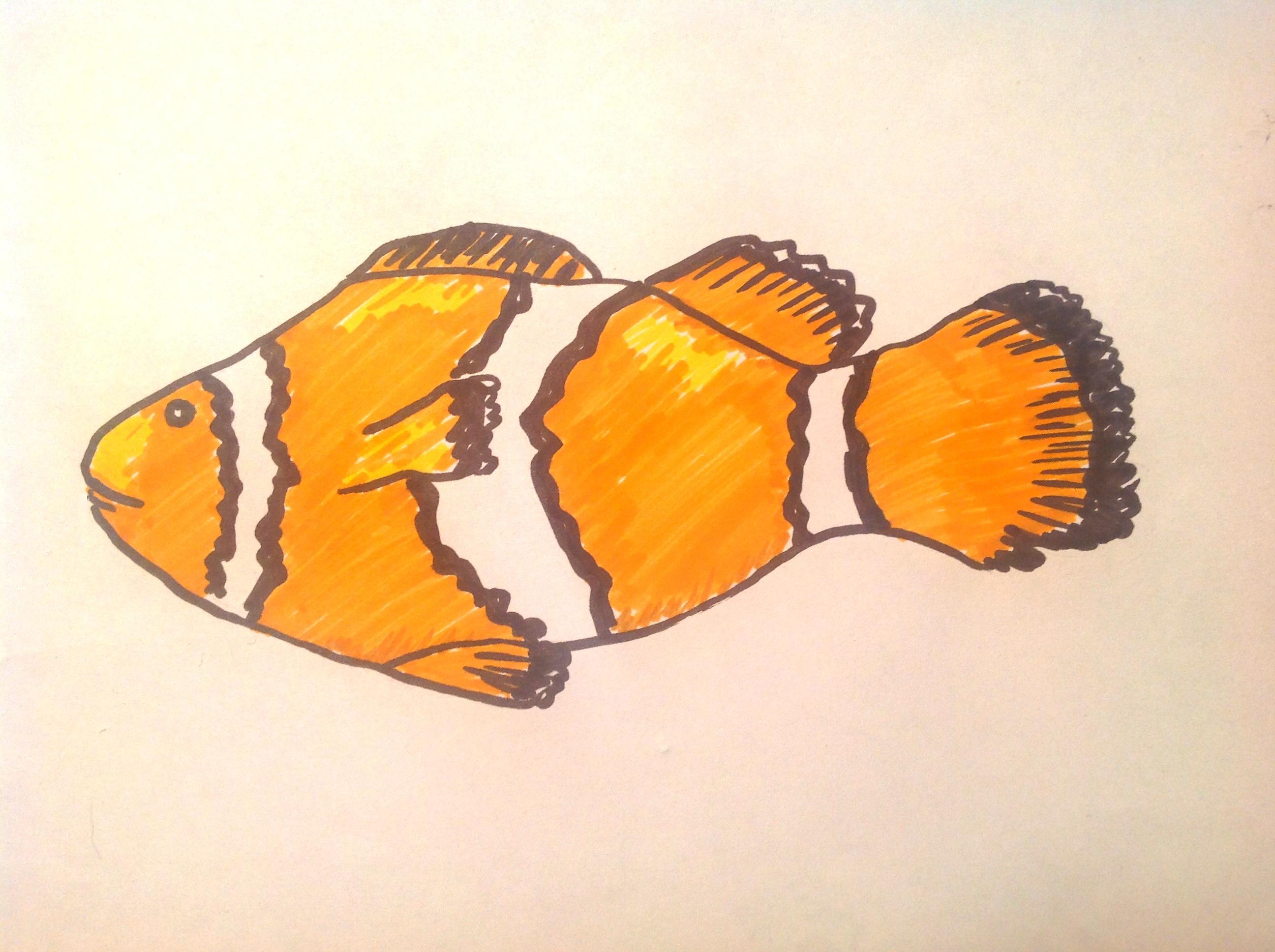 Nemo Fish Drawings Clown Fish
